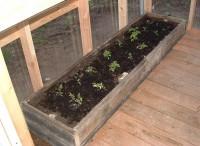 Seedlings in Rasied Bed2
