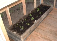 Seedlings in Rasied Bed2