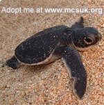 green-hatchling turtle